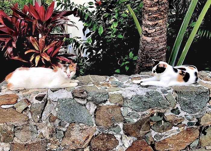 two cats laying on a rock wall with shrubbery in the background
