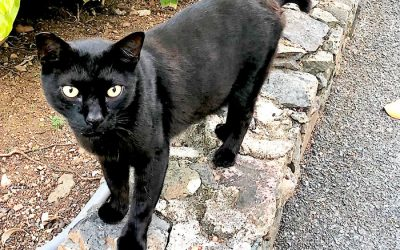 "Meet ""Batman"" – A Favorite Feline at Flamboyan"