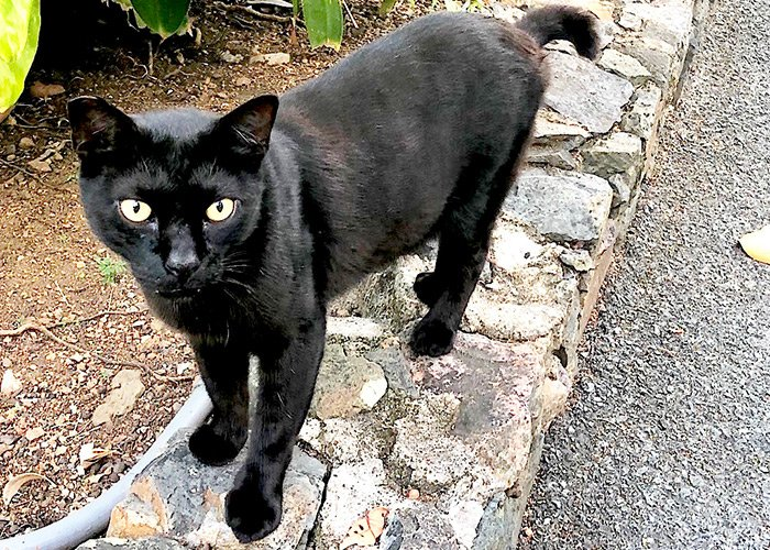 image of a black cat named batman standing on a small stone curb