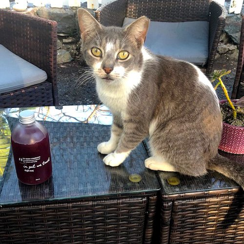 a kit sits on an outside wicker table next to a bright red bottle of tri berry kombucha