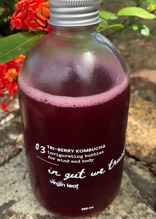 a bottle of tri bery kombucha from northside grind sitting on a stone wall with a flamboyan flower in the background